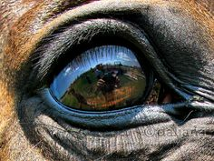 Horse eye (have something symbolic reflected in the eye but NOT obvious.  Allow the viewer to discover it for themselves)