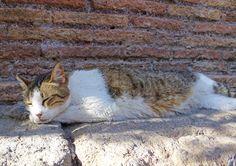 Torre Argentina Roman Cat Sanctuary