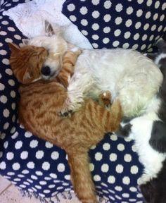 Hier sind 36 ungewöhnliche Tierfreundschaften. Den Liebe kennt keine Grenzen :-)