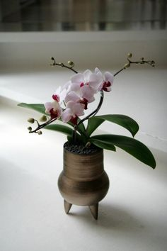 Orchid and Pottery  Pinted from http://maodesignstudio.blogspot.tw/