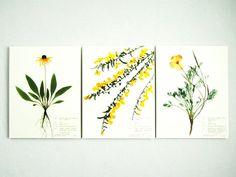 Yellow Flowers Botanical Print Set of 3, Herbarium Specimen Pressed Botanical Artwork, Black Eyed Susan, California Poppy, Wildflower Art
