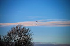 En smuk januardag ved Søholm Sø  #visitfyn #fyn #nature #visitdenmark #naturelovers #natur #denmark #danmark #dänemark #landscape #nofilter #assens #mitassens #vildmedfyn #fynerfin #assensnatur #vielskernaturen #tree #visitassens #forrest #instapic #picoftheday #sky #january #birds