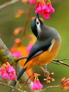 Gyönyörű egzotikus madár..