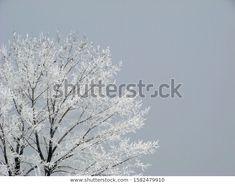 Park Winter Landscape Frozen White Fairy Stock Photo (Edit Now) 1582479910 Winter Landscape, Photo Editing, Royalty Free Stock Photos, Frozen, Fairy, Illustration, Photography, Editing Photos, Photograph