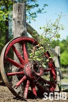 love the ol' wagon wheel & against the fince. not the weeds so much would replace with something more cute.