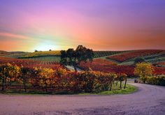 Energy efficient and solar WINE! Check out the story of this beautiful Paso Robles Vineyard & Winery going solar. Very cool, Pomar Junction Vineyard.