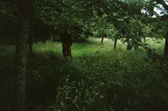 The Harris Garden, photo by Sophia Kaplan