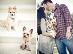 engagement photos with little dogs - Google Search