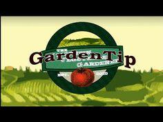 3 mistakes all gardeners make Garden Tip via The Wisconsin Vegetable Gardener #WI #Gardening