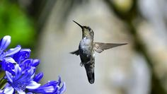 Small animals see in slow motion, study finds