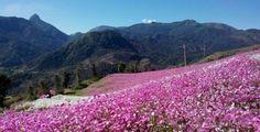 Petrópolis em flores: 11 fotos da Cidade Imperial florida