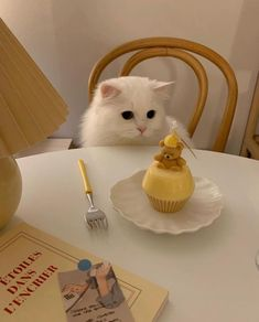 Cute Baby Cats, Cute Cats And Kittens, Cute Baby Animals, Kittens Cutest, Cute Dogs, Cute Babies, Cat Aesthetic, Aesthetic Yellow, Pretty Cats