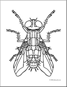 flies clip art clip art insects housefly coloring page preview