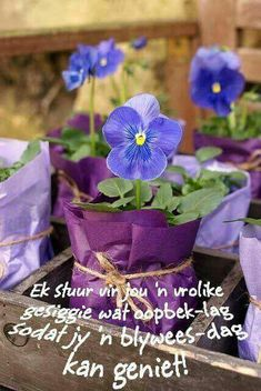 Good Night, Good Morning, Goeie More, Special Quotes, Afrikaans, Messages, Plants, Language, Nighty Night