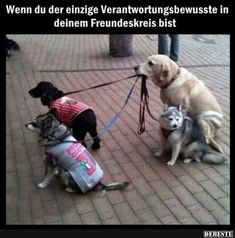 It's Never Easy Being The Responsible One funny cute animals dogs adorable dog puppy animal pets lol humor funny pictures funny animals funny pets funny dogs Funny Animal Pictures, Funny Animals, Cute Animals, Funniest Pictures, Funny Photos, Baby Animals, I Love Dogs, Puppy Love, Cute Puppies
