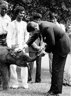 President Ronald Reagan holds the trunk of baby elephant Jayathu, who was presented to him by President Jayewardene of Sri Lanka on June President Ronald Reagan, Our Legacy, History Photos, Us Presidents, Baby Elephant, Couple Photos, American, Pictures, Sri Lanka