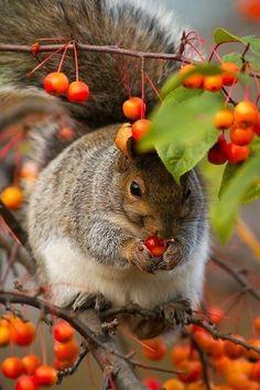 Squirrel in autumn…