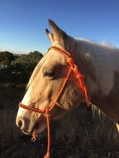 NEW Bitless Bridle Chin Slip Style MultiColor by SimpleLoops