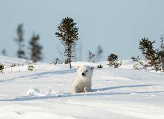 wapusk national park | Manitoba Photos - Featured Images of Manitoba, Canada - TripAdvisor