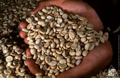 We pick the best beans to produce one of the best coffees in the world, one by one, guaranteeing the most delicious taste.