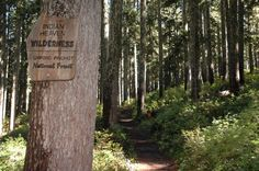 Indian Heaven Wilderness in Gifford Pinchot National Forest: Best backpack trips for late summer, fall | OregonLive.com