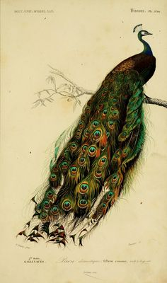 Universal Dictionary of Natural History - Paris