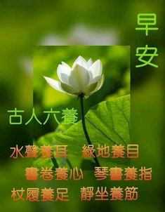Good Morning Flowers, Morning Wish, Chinese Quotes, Herbs, Poster, Herb, Billboard, Medicinal Plants