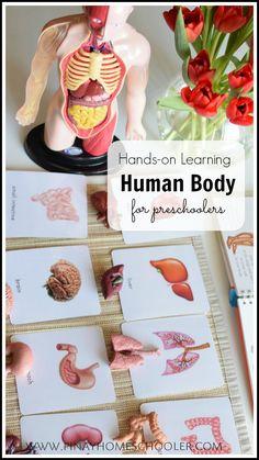 hands on learning on the human body for #preschooler #homeschooler #homeschool #montessori #printables #science #humanbody #homeeducation