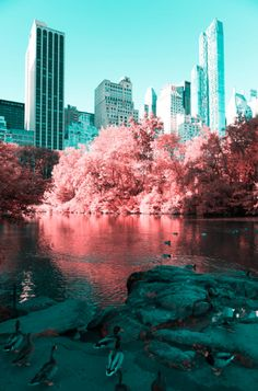 Italian photographer Paolo Pettigiani uses infrared photography to transform New York into a surreal wonderland with his series All The Bright Places, Places Around The World, Around The Worlds, Landscape Photos, Landscape Photography, Travel Photography, Beach Landscape, Tumblr Scenery, New York Photographie