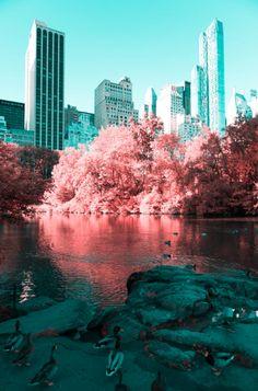 Um passeio pelo Central Park, em Nova Iorque, com uma câmera e um filtro…