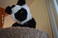 I can't believe I even questioned whether or not an $8.00, cat-sized panda hat was a good investment or not