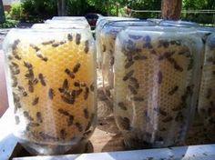 DIY Mason Jar Bee Hive instructions - fresh honey in your backyard! DIY Mason Jar Be Backyard Projects, Diy Projects, Garden Projects, Fun Backyard, Backyard Chickens, Garden Ideas, Mason Jars, Bees Knees, Bee Keeping