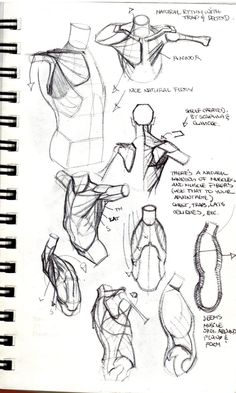 Anatomy Drawing Tutorial Various by on DeviantArt - Figure Drawing Tutorial, Human Figure Drawing, Figure Drawing Reference, Art Reference Poses, Anatomy Reference, Life Drawing, Drawing Faces, Drawing Tutorials, Painting Tutorials