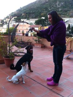 Rottweiler playing with jackrussel