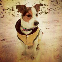 Procházka | Walk #prochazka #prochazkasepsem #walk #walkwithdog #snow #snih #sepsem #withdog #jrtofinstagram #jrt #jackrussellterrier #jackrussell #lovemydog #milujusvehopsa #obojkyblackberry #blackberrycollars #obb