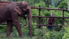 Brazil opens Latin America's 1st elephant sanctuary  - CNN.com