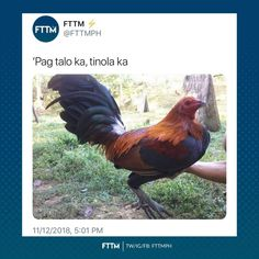 Filipino Memes, Filipino Funny, Pinoy Quotes, Tagalog, Transformers, I Laughed, Philippines, Vines, Funny Pictures
