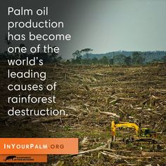 We can change this. www.inyourpalm.org > www.ran.org. Boycott palm oil - it's in your flavored coffee creamer.