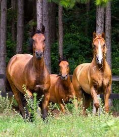 "https://flic.kr/p/9b2LEY | Brotherhood... | <a href=""http://www.raphaelmacek.com"" rel=""nofollow"">www.raphaelmacek.com</a> Raphael Macek - Horse Photography"