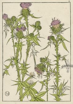 Botanicals. Jeannie Foord «Decorative Plant and Flower Studies: For the Use of Artists, Designers, Students and Others»