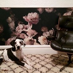 The wallpaper is starting to show up all over the world! DUTCH LOVE now hangs in San Francisco and serves as the perfect backdrop for this perfect Great Dane Tennessee! I love it! Thanks @christinamcneill for putting it up in your gorgeous home! Xoxoxo #awbwallpaper #flowers #florography