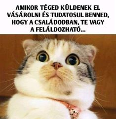 Pin by Rebi Pampiszli on Hülyeségek Puppies And Kitties, Cats And Kittens, Funny Gags, Funny Jokes, Shocking Games, Funny Animals, Cute Animals, Morning Memes, Clean Memes