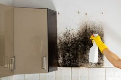 Can you recognize the difference between mold and mildew? Chicago mold experts outline how to spot mildew vs mold in your home. Mold Cleanup, Mold Spray, Water Damage Repair, Flooded Basement, Types Of Mold, Get Rid Of Mold, Mildew Remover, Ideas Para Organizar, Removal Services