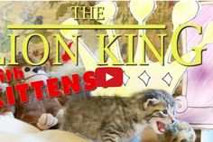 You May Have Seen The Lion King But I Bet You Never Saw It Like This. These Kitties Deserve Oscars For Their Work!