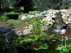 Google Image Result for http://www.your-garden-ponds-center.com/images/garden-ponds.jpg