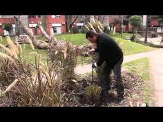 Poda y División de Gramineas – Jardín Urbano