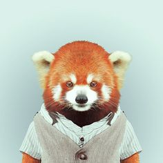 Hilarious Portraits Of Zoo Animals Wearing Fashionable Clothes