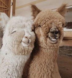 базовый гардероб, одежда для спорта, мода 2020 Baby Animals Super Cute, Cute Little Animals, Cute Funny Animals, Cute Dogs, Funny Pets, Fluffy Cows, Fluffy Animals, Baby Animals Pictures, Cute Animal Photos
