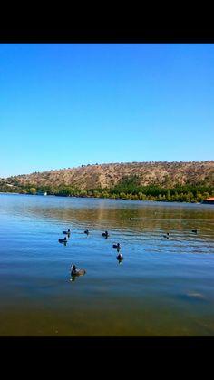 #nature #lake #tree #bird #duck #blue #lesfleursdumal #allez #vous #primera #los #primeros #outside
