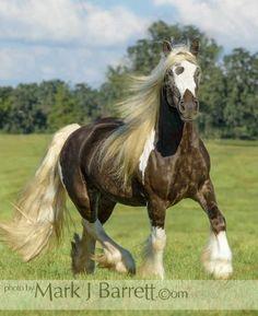 Stock Photos Horses, Equine Photography and Video by Mark J. Big Horses, Pretty Horses, Beautiful Horses, Mini Cows, Fox Dog, Grace Beauty, Equine Photography, Four Legged, Gypsy